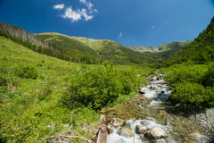Water stream in the mountains Stock Photos