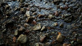 Flowing River Water. Water in a stream moving over the rocks stock video