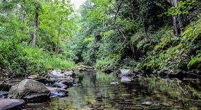 Water stream in the green nature royalty free stock photography
