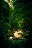 Water stream (Portrait). Than Lod Yai cave National Park, Kanchanaburi, Thailand Royalty Free Stock Image