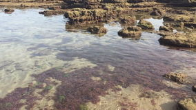 Water stream in the reef stock footage