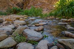 Water stream on a rocky mountain. Near a waterfall home to different types of reptiles in the mountains of Fujairah, United Arab Emirates Royalty Free Stock Photos