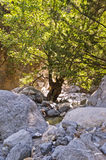 Water stream through rocky soil of Samaria gorge Stock Photos