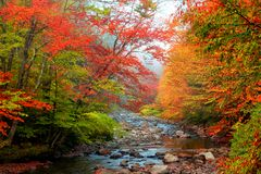 Water stream in rural Vermont. In autumn time Royalty Free Stock Photography