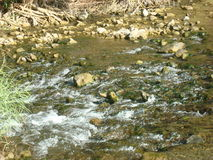 Water stream. Small water stream inside the forest Royalty Free Stock Photos