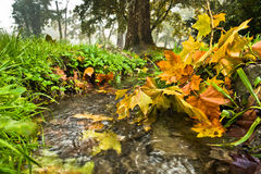 Water stream with some yellow fallen leaves at autumn Royalty Free Stock Photography