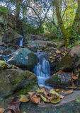 Water stream and stones in autumnal forest. A wild-water creek flows over big stones in a shady deciduous forest during fall Stock Photo