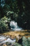 Water Stream Surrounded by Plants royalty free stock images