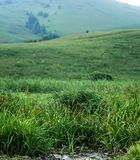 Water stream, tall green grass at the foot of the hill with meadows and trees, Altai Mountains, Kazakhstan.  Royalty Free Stock Image