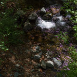 Water Stream in Tris Elies, Troodos mountains forest Stock Photography
