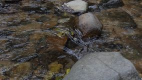 Water Stream in tropical rain forest. Concept real time into slow motion. nature background stock footage