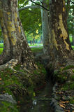 Water stream between two big trees at morning in Topcider park Royalty Free Stock Image