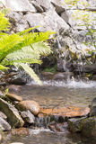 Water Streaming in Creek Royalty Free Stock Photo
