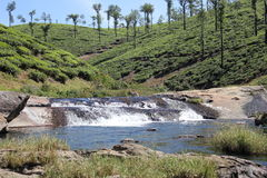 Water streem in between Tea estate Stock Photo