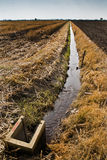 The water Supply. The remaining of padi field after harvesting with the main water supply stream Stock Image