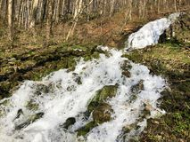 Water supply flowing source Tschuder with waterfall and karst spring or Karstquelle Tschuder, Schwende royalty free stock photos