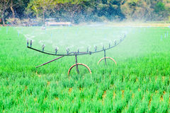 Water supply in onion field Stock Photos