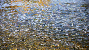 Water surface. For backgrounds and textures Stock Image