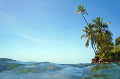 Water surface and coconut trees leaning Royalty Free Stock Images