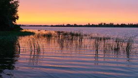 water surface in the evening at sunset with a growing grass royalty free stock images