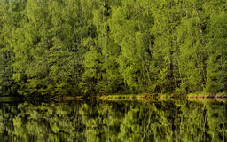 Water surface and forest Stock Photos