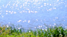 Water surface glare sun blurred. Bank of the river with green grass stock footage