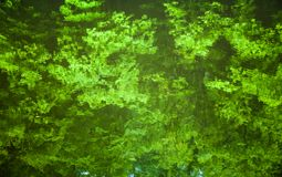 Water surface with the reflection of the green trees Stock Photos