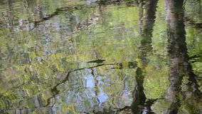 Water surface reflection Stock Image