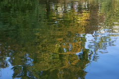 Water surface with reflection of trees. Calm surface of water with reflection of trees Royalty Free Stock Image