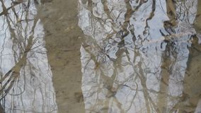 Water surface with reflections of leafless trees and branches stock video footage