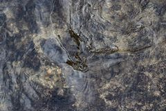 Water surface with ripples. Windy weather. Background or texture.  royalty free stock images