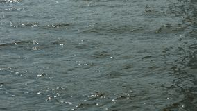 Water surface. Of a stream with a light breeze giving tiny wave pattern stock video footage