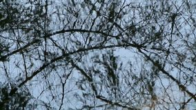 Water surface with tree mirroring. And movement stock video footage
