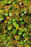 Water surface vegetation background Stock Photos