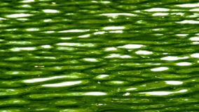Water surface with waves stock video