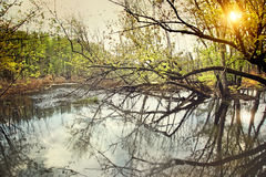 Water swamp in early spring royalty free stock photo