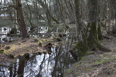 Water swamp in early spring Stock Photo
