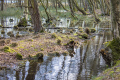 Water swamp in early spring Stock Photos