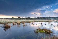 Water on swamps after the rain Stock Photo