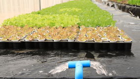 Water system in Hydroponic farm stock footage