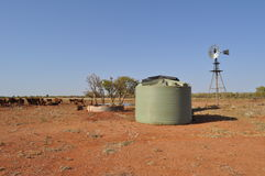 Water tank and windmill in Australian outback with cattle and stock  Royalty Free Stock Photo