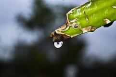 Water tappar Royaltyfria Foton