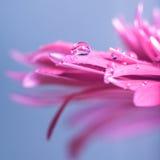 Water tappar på blomma arkivbilder