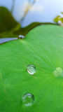 Water tappar på lotusblommaleafen Royaltyfria Bilder