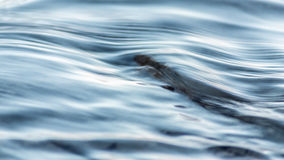 Water texture background river closeup Royalty Free Stock Photography