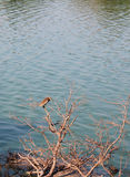 Water texture with night heron Stock Photography