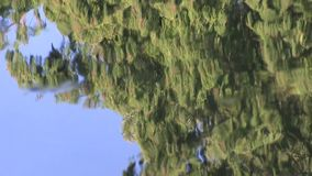 Water texture of reflected sky and conifer tree. stock footage
