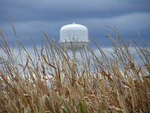 Water Tower in the Midwest. View of water tower in the background with fall wheat field in the foreground Stock Photo