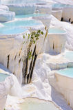 Water travertine pools at Pamukkale, Turkey stock images