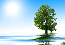 Water and tree Stock Image